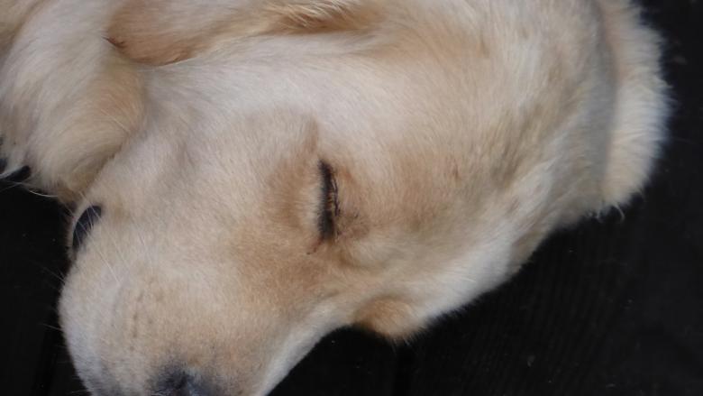 Hund Ferienhaus am IJsselmeer in den NIederlanden Schakelvilla