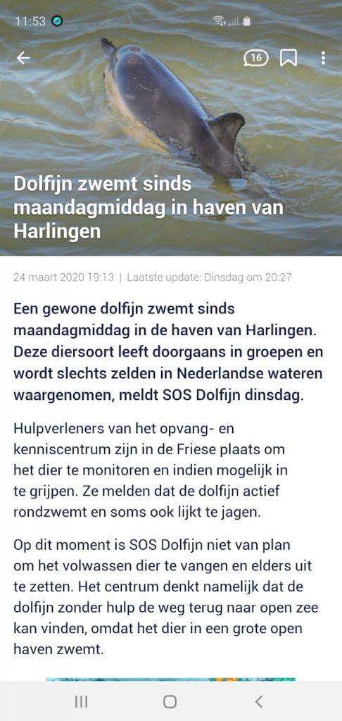Delfin in Harlingen - Delfin in Holland - holländische Nordseeküste - Ferienhaus in Holland - Schakelvilla.jpeg