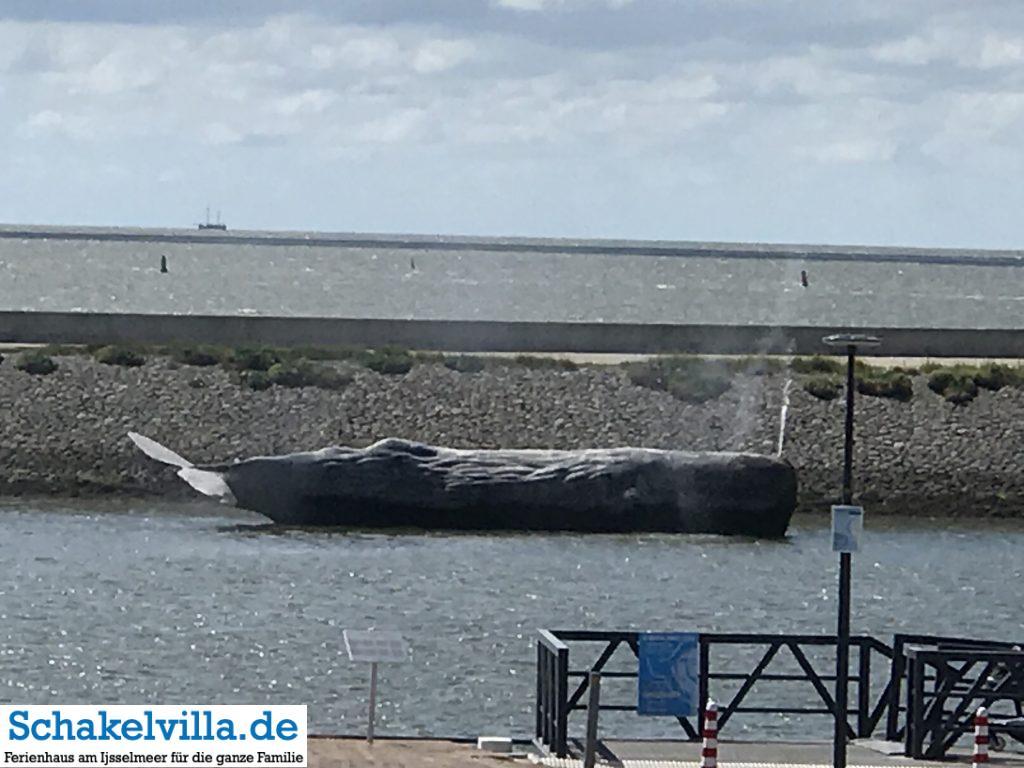 11 Fountainen Pottwal in Harlingen - Friesland - Schakelvilla Ferienhaus am IJsselmeer